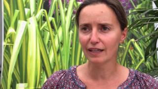 INNOV'ACTION - OLSTHOORN Floriculture