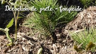 Les Jardins Familiaux des Canebiers - Mouans-Sartoux - Ecophyto